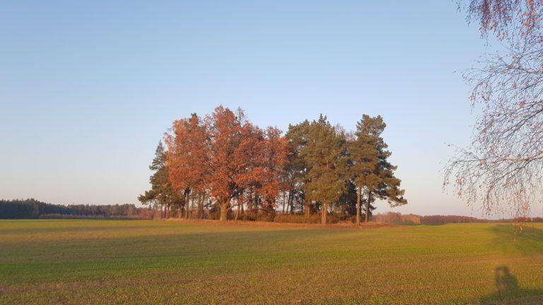 Lasek w Stołuńsku