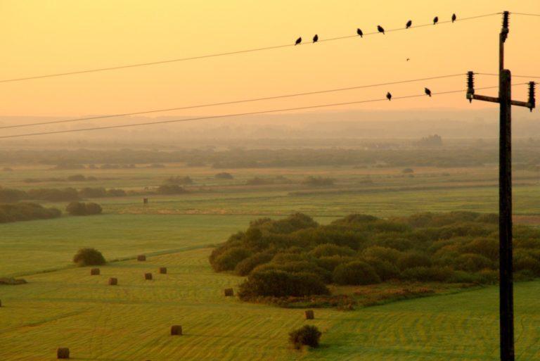 Łąki w dolinie Noteci