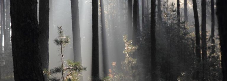 Krajeński Park Krajobrazowy