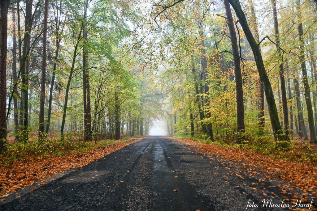 Las w okolicach Lutówka